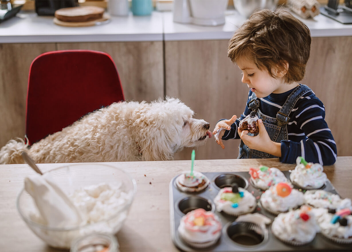 Boy feeding dog cake